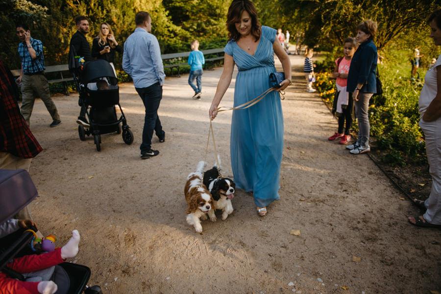 pieski na ślubie, psi przyjaciel na ceremonii ślubnej