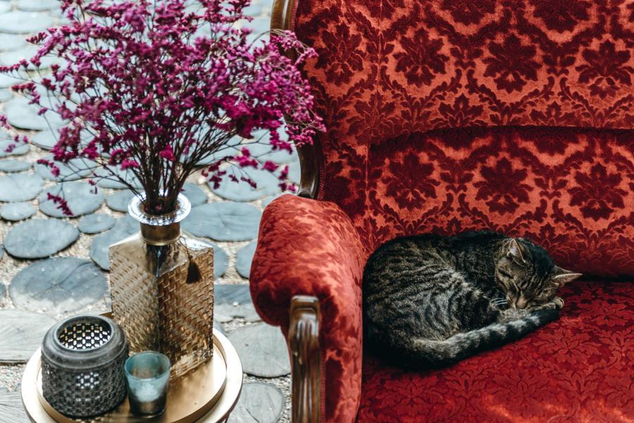 kot na weselu, stodoła wszystkich świętych,