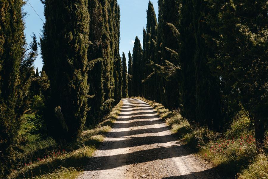 toskania, aleja cyprysów, ślub we włoszech, ślub w Toskanii