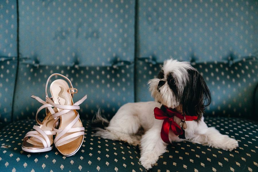 detale ślubne, pies na ślubie, przygotowania pani młodej, buty do ślubu