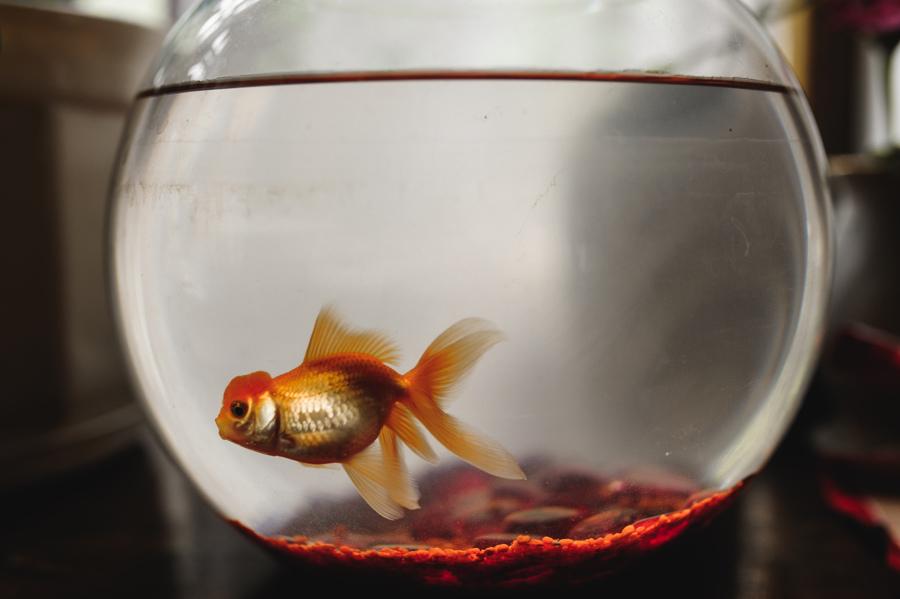 rybka akwarium woda