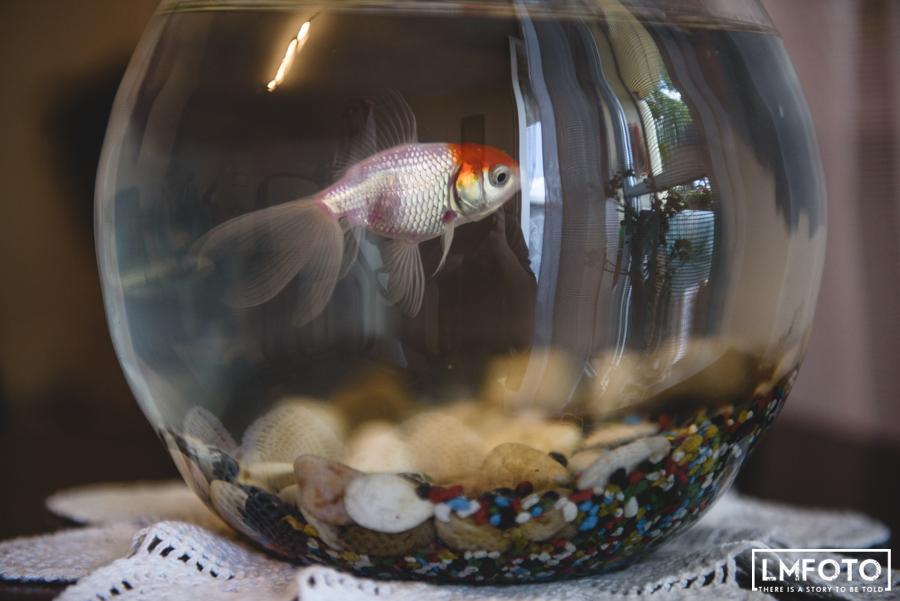 ryba akwarium woda