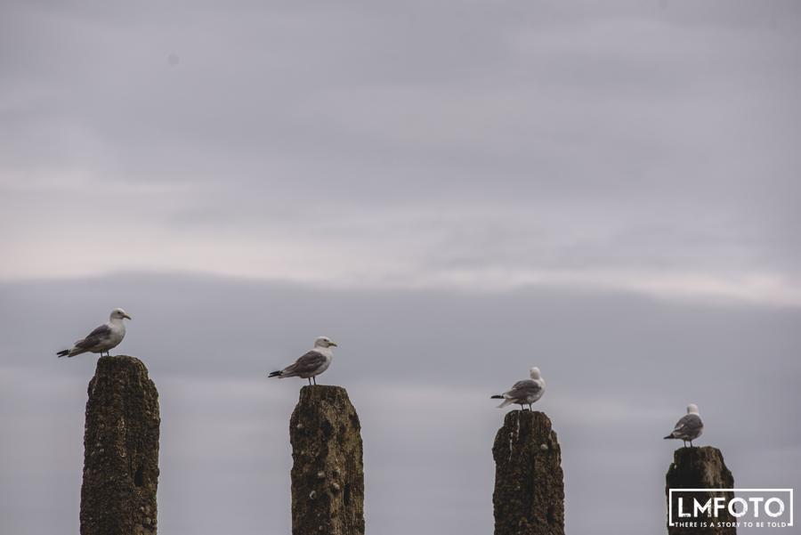 ptaki skaly mewy niebo
