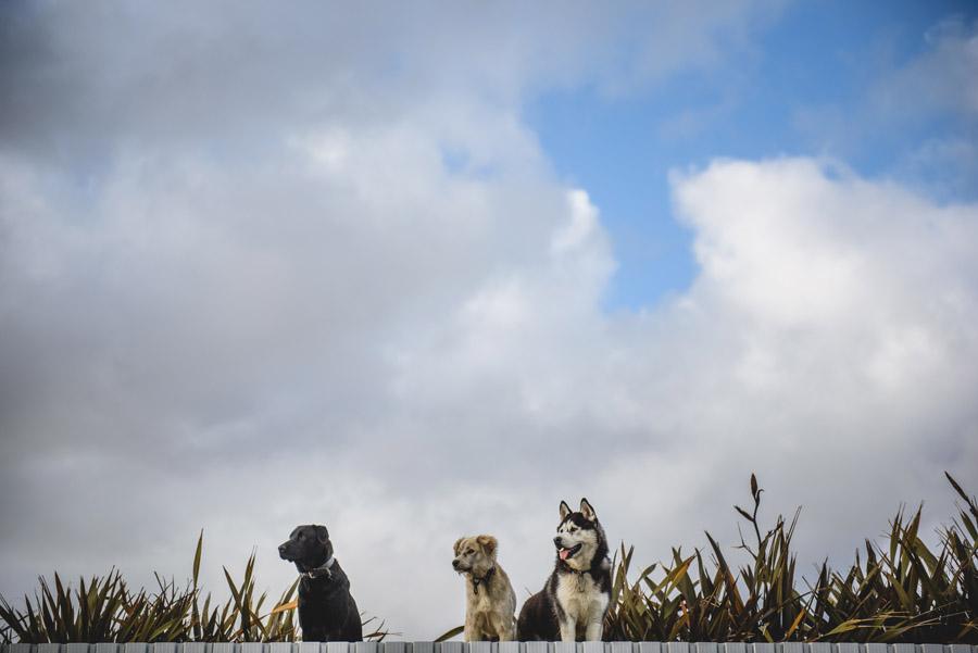 psy niebo widok